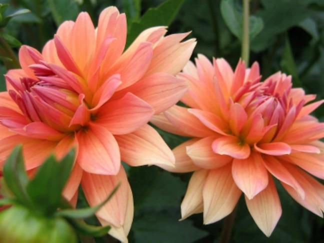 Sai lam chet nguoi khi dung hoa thuoc duoc tri benh