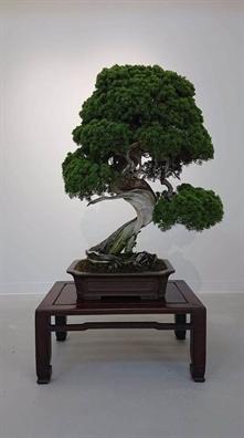 Nhat Ban: Ke gian danh cap 7 cay bonsai quy trong dem