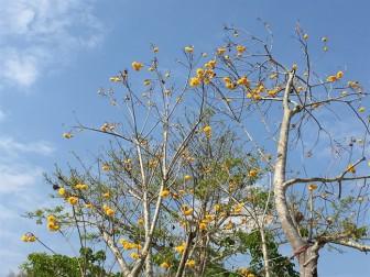 Mùa xuân ở Chiang Mai
