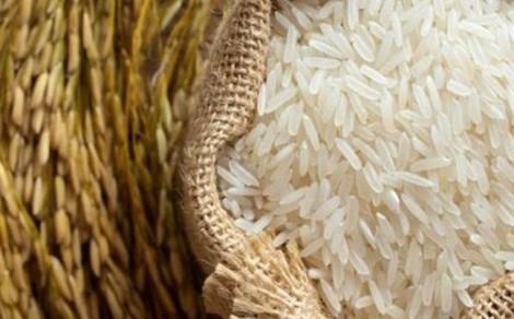 Giá lúa gạo giảm mạnh, ngân hàng 'bơm' vốn mua tạm trữ