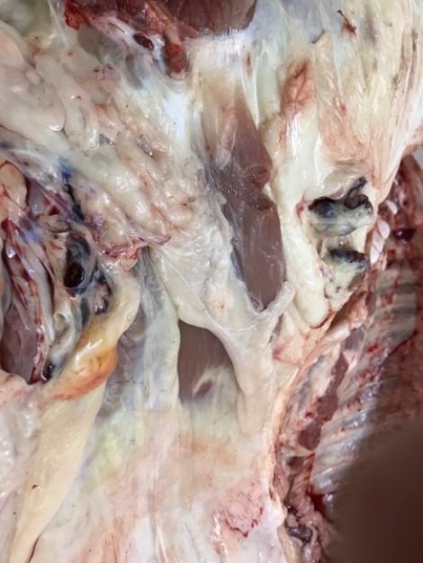 Liên tục xử phạt, tiêu hủy thịt heo nghi bệnh vào chợ đầu mối Bình Điền