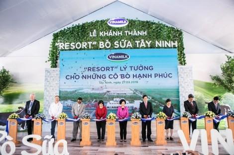 Resort bò sữa Vinamilk Tây Ninh – Ngôi nhà lý tưởng của những cô bò hạnh phúc