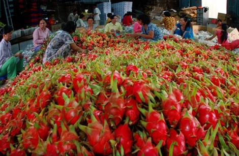Doanh nghiệp muốn xuất khẩu nông sản chính ngạch vào Trung Quốc