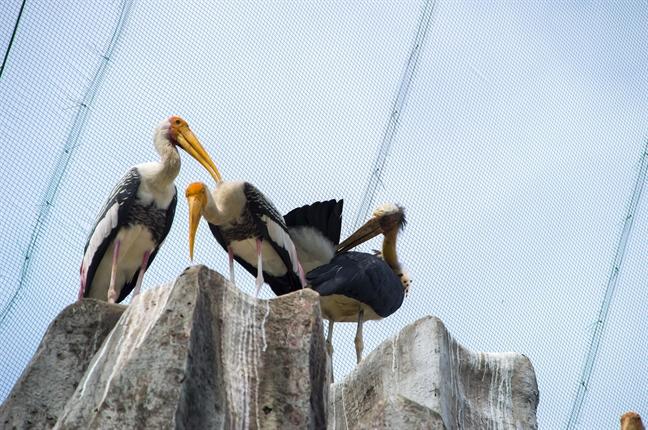 3 chim gia day quy hiem ra doi trong cong vien o Sai Gon