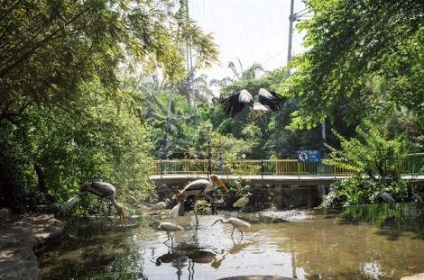 3 chim già đẫy quý hiếm ra đời trong công viên ở Sài Gòn