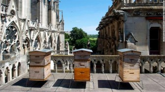 Đàn ong trên mái Nhà thờ Đức Bà sống sót qua lửa dữ