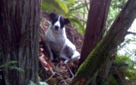 Chó trung thành tìm người cứu chủ gặp nạn
