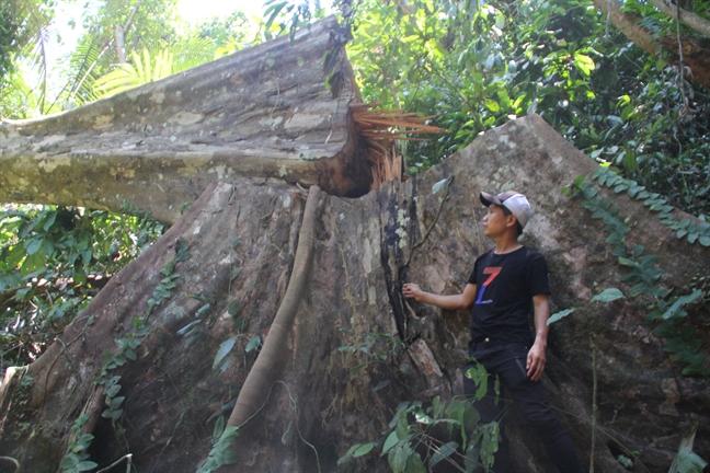 Vu pha rung tai Tra Leng, Quang Nam: Hoan tat ho so de khoi to vu an