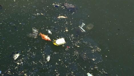 Cần 30 tỷ đồng ngăn cá chết ở kênh Nhiêu Lộc – Thị Nghè