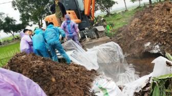 Xử lý không kịp 'tốc độ' dịch: Tự chôn heo chết,  thả xác lềnh bềnh trên kênh