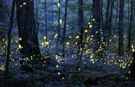 Vũ điệu ánh sáng ở Great Smoky Mountains