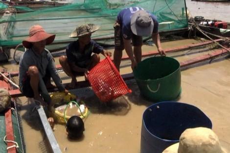 Cá bè chết trắng trên sông La Ngà, bán rẻ 20.000 đ/kg nhưng không ai mua