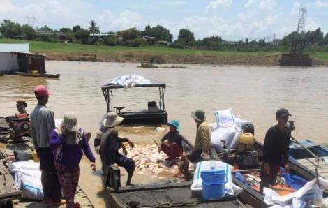 Vì sao hơn 340 tấn cá chết trên sông La Ngà?