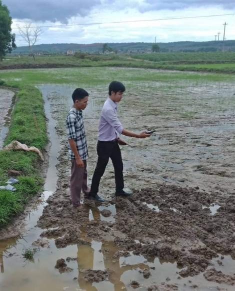 Sau khi san ủi ruộng vừa gieo sạ, lãnh đạo xã hứa sẽ đền bù cho dân