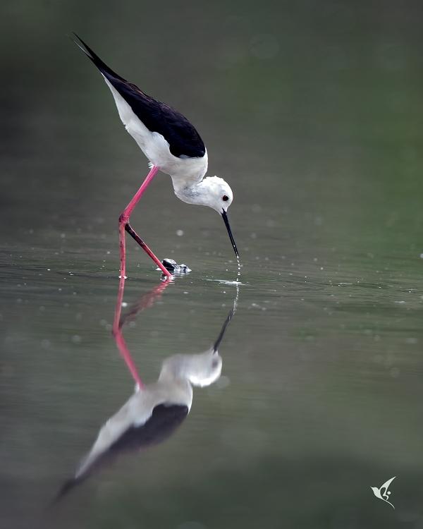 Can canh nhung con chim la, dep kho ta o Sai Gon