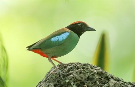 Cận cảnh những con chim lạ, đẹp khó tả ở Sài Gòn