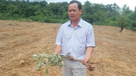 Vườn điều 1.000 cây thành bãi đất trống sau 2 lần bị kẻ gian phá hoại