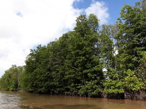 Vườn quốc gia Mũi Cà Mau lập quỹ đen, chi khống tiền tỷ