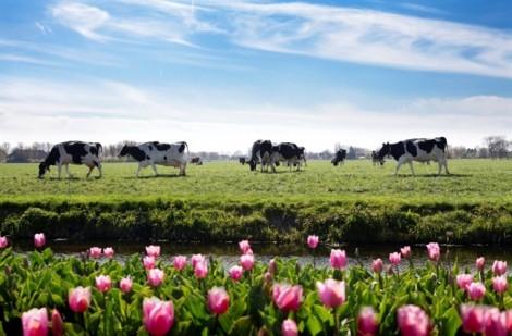 Tất tần tật về DHA chuẩn Hà Lan trong sữa bột Dutch Lady mẹ nên biết