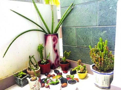 Chuyên đề Cho con cơ hội: Vườn của Bột
