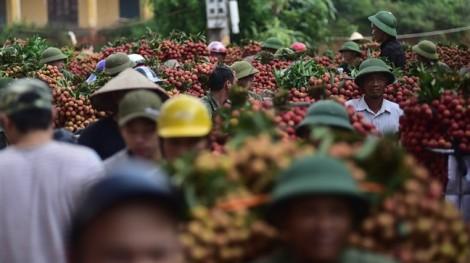 Cận cảnh chợ vải thiều doanh thu 3.000 tỷ đồng mỗi năm tại Bắc Giang