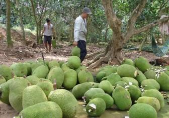 Lý do khiến dân Trung Quốc không ăn mít Thái từ Việt Nam thời điểm này