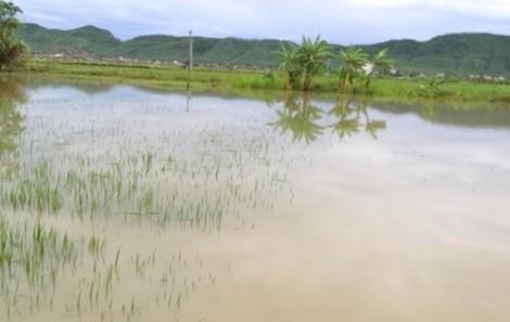 Chạy ra ruộng lúa sau mưa, 2 cháu nhỏ ngã xuống nước tử vong