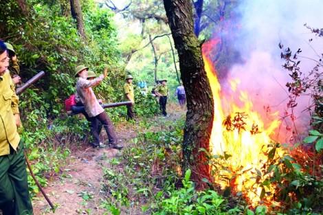 Chống cháy rừng kiểu 'tay không bắt giặc'