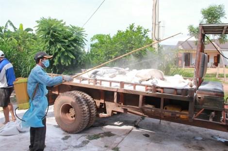 7 huyện thị của tỉnh Đắk Lắk có dịch tả heo châu Phi