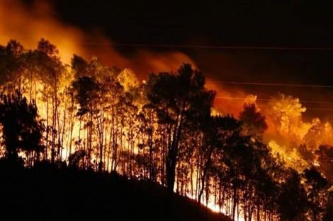 Người phụ nữ 36 tuổi bị khởi tố vì đốt cỏ ruộng làm cháy rừng