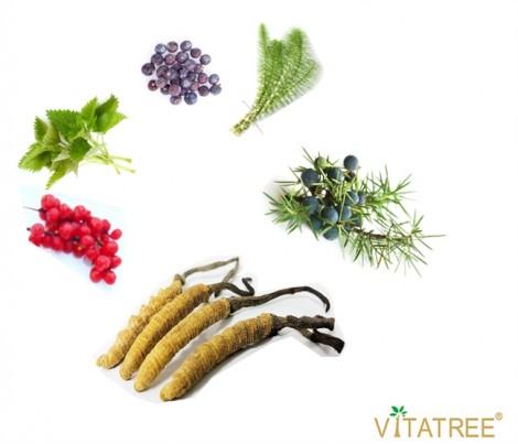 Viên uống bổ thận Vitatree Kidney Tonic