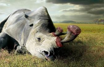 Uống bột sừng tê giác, đầu ngón tay của bé 2 tuổi ở Sài Gòn chuyển màu xanh tím