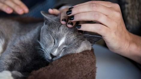 Bị tù 10 ngày vì nuôi mèo đi lạc?