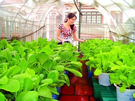 Biến ban công, sân thượng thành vườn cây ăn trái