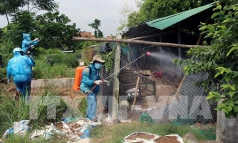 Phát hiện cúm gia cầm ở Bà Rịa - Vũng Tàu