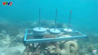 Gameshow đặt sắt, bê tông đè lên san hô để chơi: Kém hiểu biết và thiếu trách nhiệm!