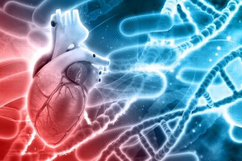 Thiếu một gen trong quá trình tiến hóa làm tăng nguy cơ đau tim ở người