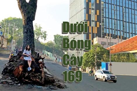 Dưới bóng cây 169