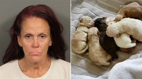 Một phụ nữ bị kết án tù vì vứt 7 chó con vào bãi rác
