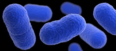 Tây Ban Nha: một phụ nữ chết vì nhiễm khuẩn listeria trong thịt heo
