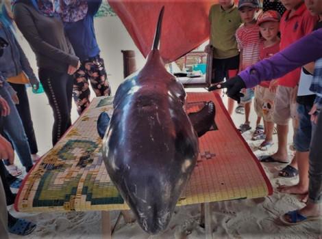 Người dân dựng rạp cứu cá voi dài 2,5 mét bị thương, dạt vào bờ biển
