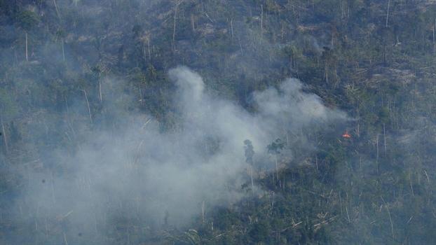 Ngon lua Amazon: Loi canh tinh muon mang