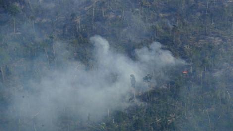 Ngọn lửa Amazon: Lời cảnh tỉnh muộn màng