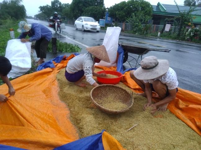 Nguoi dan Quang Binh, Quang Tri hoi ha gom thuyen, gat lua phong bao