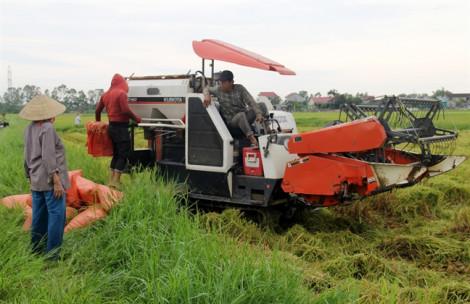 Nông dân Nghệ An, Hà Tĩnh hối hả thu hoạch lúa chạy bão Podul