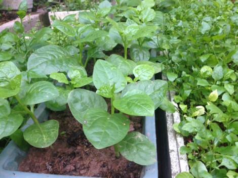 Thực phẩm nuôi trồng gần nhà máy Rạng Đông được khuyến cáo không sử dụng sau vụ cháy