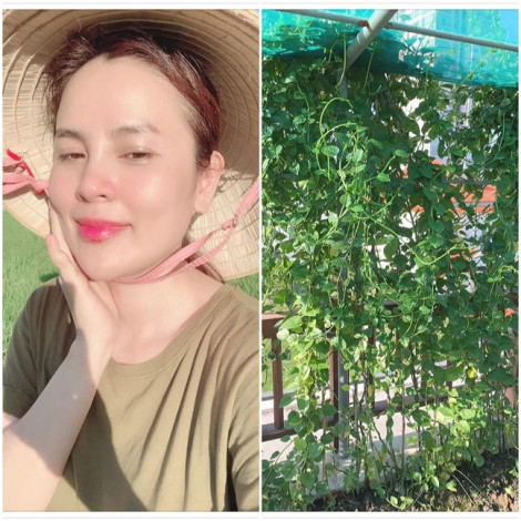 Choáng ngợp với vườn rau 'ăn không kịp thở' của Hoa hậu Phương Lê