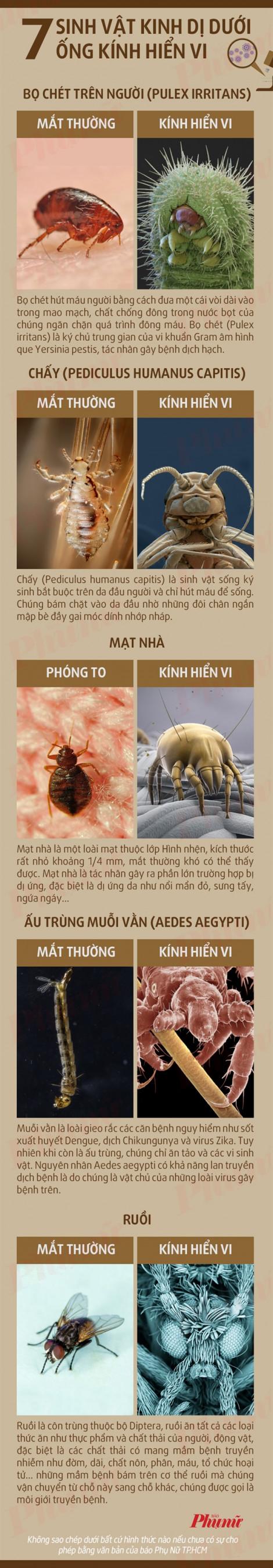 Những sinh vật kinh dị dưới ống kính hiển vi