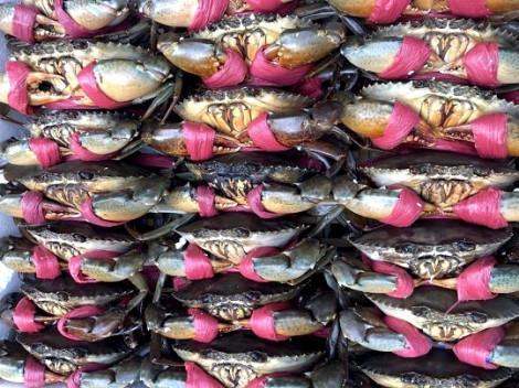Hải sản Việt Nam xuất khẩu vào Úc nhiễm vi sinh