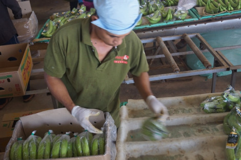 Rau quả Việt Nam xuất khẩu sang Trung Quốc giảm mạnh
